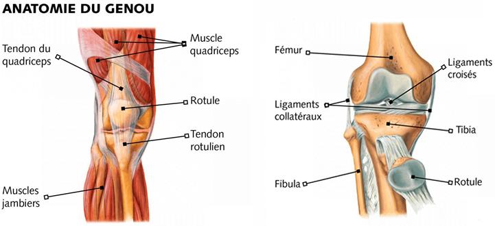 Douleur genou : causes de douleur aux genoux