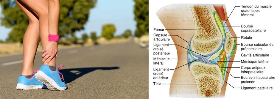 Douleur genou qu 39 est ce que le genou douloureux for Douleur sur le cote exterieur du genou